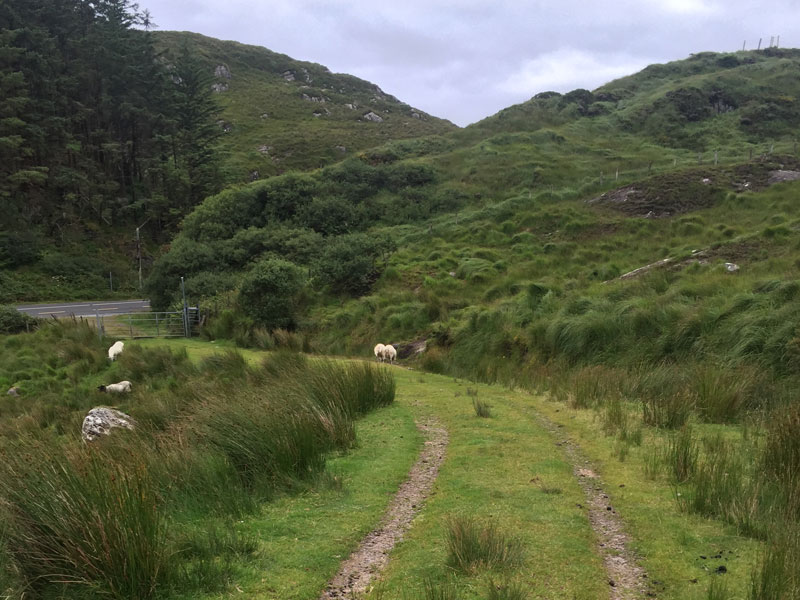 Grassy_path_on_the_kerry_way