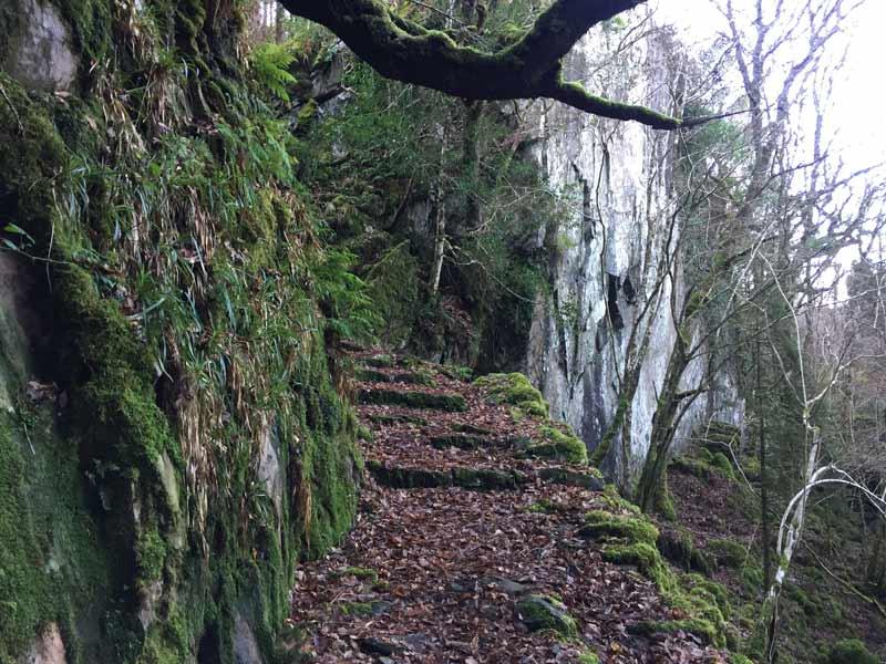 Lickeen Wood Enchanted Gorge