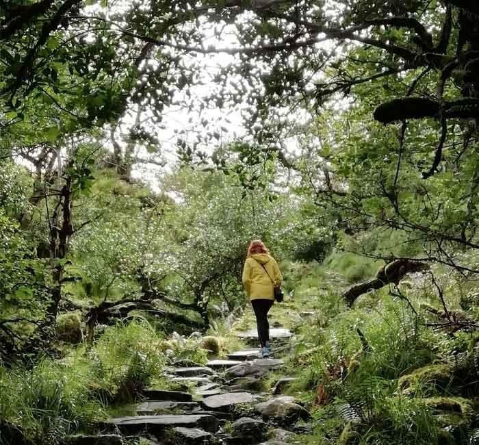 Kerry Way Woodland - Álaind Walking Holiday