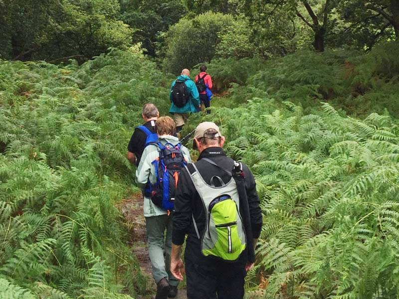 Álaind Walking Group passing native woodland on Kerry Trails Walking Holiday